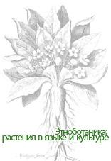 Коллектив авторов — Этноботаника: растения в языке и культуре